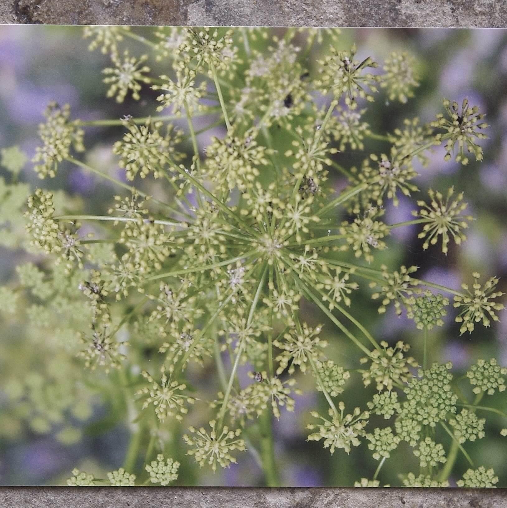 'Secret Garden' Greetings Cards